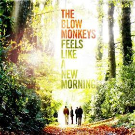 blow monkeys
